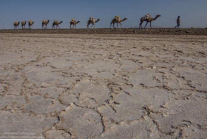 viaje-autor-etiopia-camello