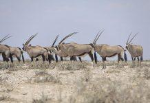 viaje-namibia-safari-etosha