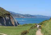 viajar-con-perro-destinos