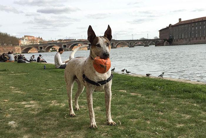 viajar-francia-perro