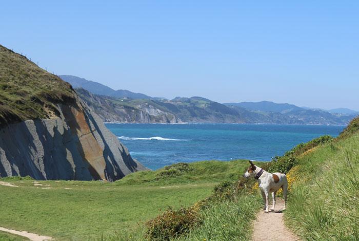 viajar-perro-pais-vasco