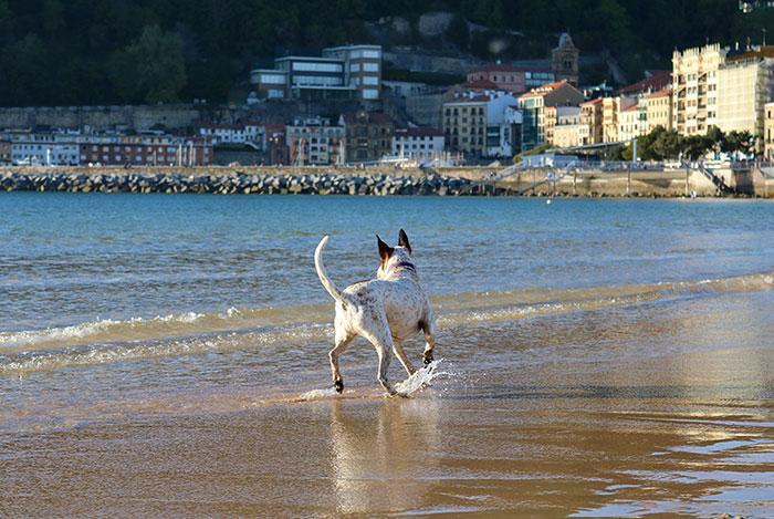 viajar-perro-san-sebastian