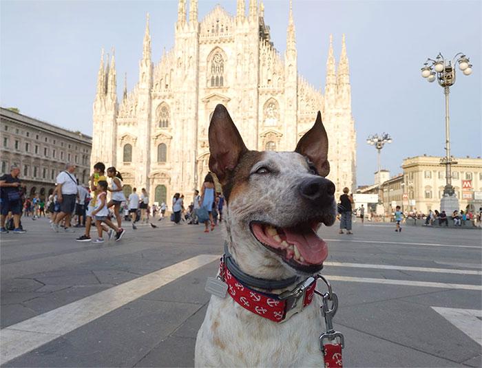 viaje-milan-perro