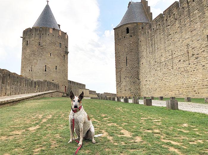 viaje-perro-francia