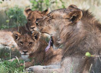 mejor-epoca-safari-etosha-namibia