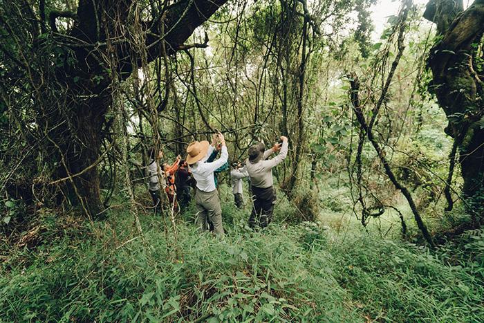 trekking-uganda-gorilas-viaje