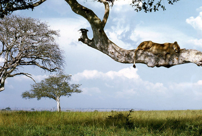 viaje-autor-uganda-safari