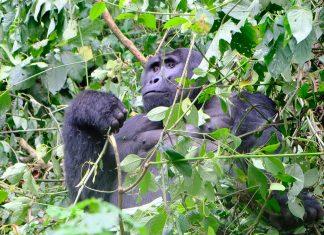 que-hacer-en-uganda