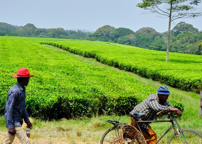 que-hacer-uganda-campos-te