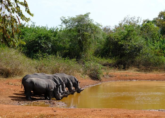 que-hacer-uganda-rinocerontes