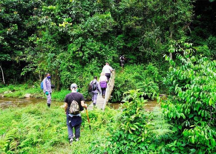 que-hacer-uganda-trekking